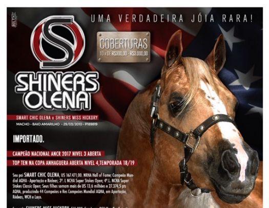 SHINERS OLENA